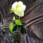 Evighetens Vila begravningsbyrå vit ros